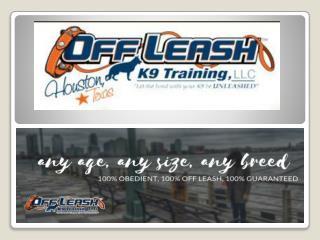 Dog Trainer Long Island NY | Dog Training Long Island | Dog Trainer Nassau NY | Dog Trainer Suffolk County NY | Off Leas