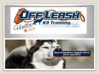 Fairfax Virginia Dog Trainers | Fairfax Off Leash K9 Dog Training | Dog Obedience Training Fairfax VA | Expert Dog Train