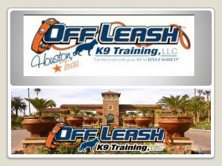 Dog Trainer Henderson | Dog Training Henderson NV | Dog Trainer Henderson | Off Leash K9