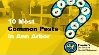 10 Most Common Pests in Ann Arbor
