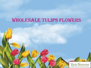 Wholesale Tulip Flowers - www.wholeblossoms.com