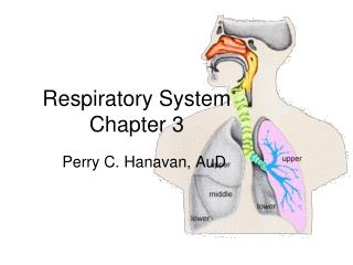 Respiratory System Chapter 3