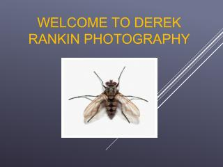 Derek Rankins
