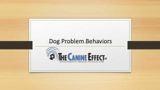 Dog Problem Behaviors