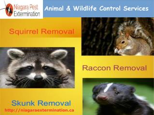 Animal & Wildlife Control Services In St.Catharines,Welland,Niagara Falls