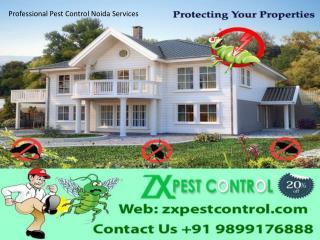 Professional Pest Control Noida Services -  9899176888