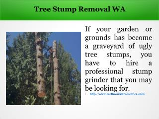 Tree Stump Removal WA