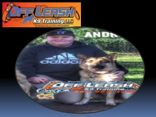 Dog Trainers Portland