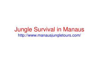 Amazing jungle tours in Manaus