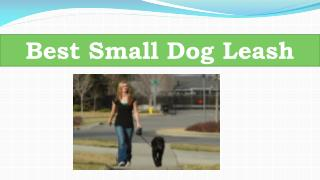 Best Small Dog Leash