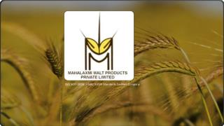 Barley Malt suppliers