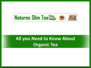 All you need to know about Organic Tea