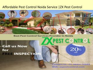Affordable Pest Control Noida Service |ZX Pest Control