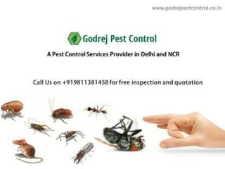 Seeking in Pest Control Noida Call Godrej