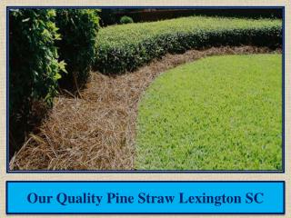 Our Quality Pine Straw Lexington SC