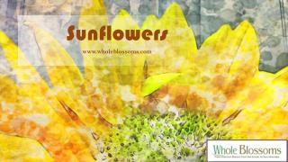 Wholesale Teddy Bear Sunflowers - www.wholeblossoms.com