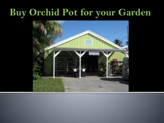 Buy variety of Orchid Pot for your Garden