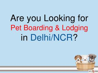 Pet Boarding & Lodging in Delhi, India