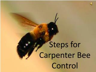 Steps for Carpenter Bee Control