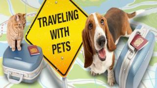 Important Tips for traveling with Pet on a Road Trip