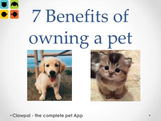 7 benefits of owning a pet