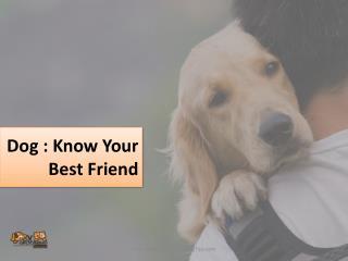 Dog : Man's Best Friend