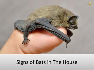 Signs of Bats in The House