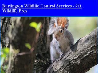 Wildlife Control Burlington Ontario