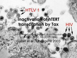 Inactivation of hTERT transcription by Tax
