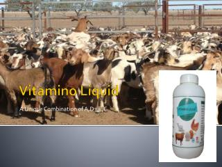 Goat feed additives