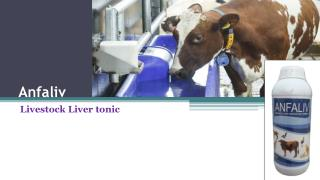 Cattle Liver tonic with Amino Power