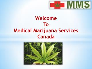 Get Best Medical Cannabis Treatment at Medical Marijuana Services Canada.