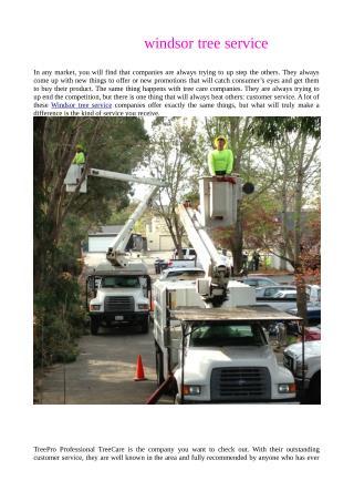windsor tree service