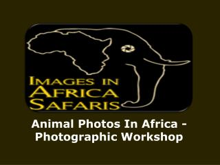 Animal Photos In Africa -Photographic Workshop