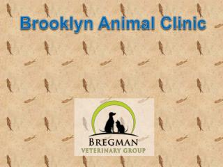 Brooklyn animal clinic