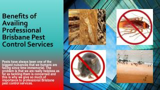 Benefits of Availing Professional Brisbane Pest Control Services