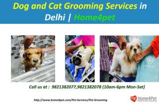 Dog and Cat Grooming Services in Delhi | Home4pet