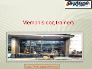 Best Dog Training Services in Fairfax Va