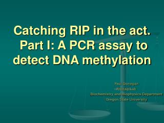 Catching RIP in the act.  Part I: A PCR assay to detect DNA methylation