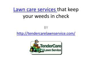 Lawn care services that keep your weeds in check