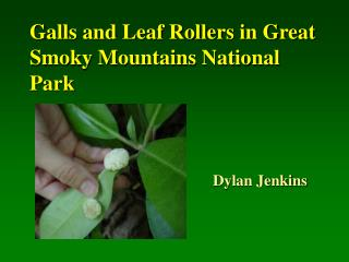Galls and Leaf Rollers in Great Smoky Mountains National Park