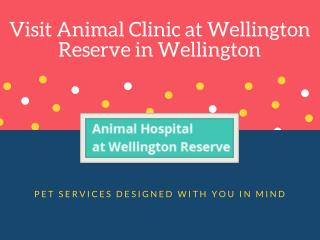 Affordable Pet Boarding Facilities in Wellington FL