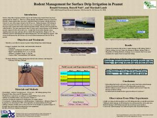 Rodent Management for Surface Drip Irrigation in Peanut Ronald Sorensen, Russell Nuti, and Marshall Lamb USDA-ARS