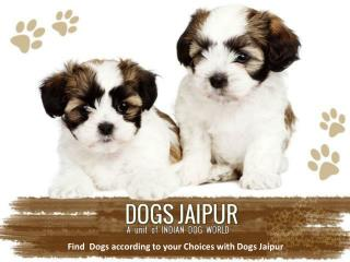 Find  Dogs according to your Choices with Dogs Jaipur