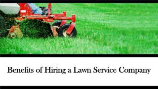 Benefits of Hiring a Lawn Service Company in St Louis, MO