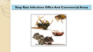 Stop Rats Infections Office And Commercial Areas