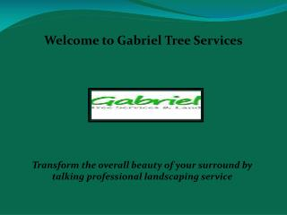 Tree cutting in Los Angeles, Tree Service in Sacramento