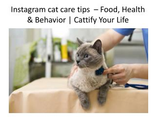 Instagram cat care tips  – Food, Health & Behavior | Cattify Your Life
