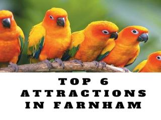 Top 6 attractions in Farnham