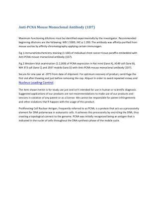 Anti pcna mouse monoclonal antibody (1 d7)